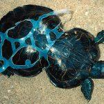 Oceanos inundados de basura